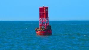 Sea Lions on Buoy #4
